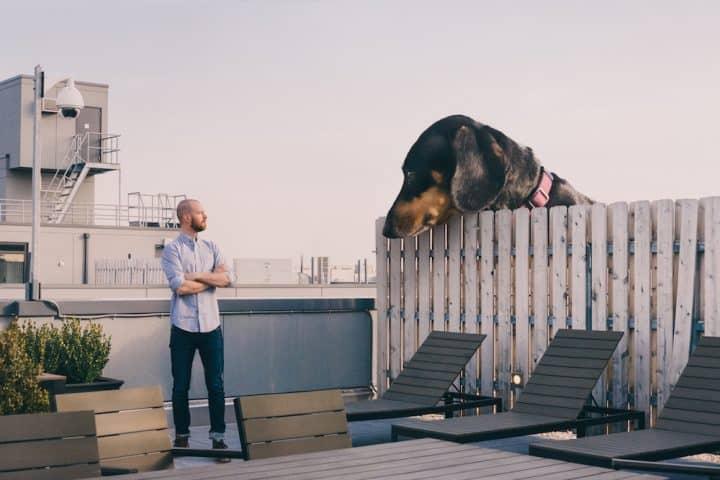Oversized Dachshund