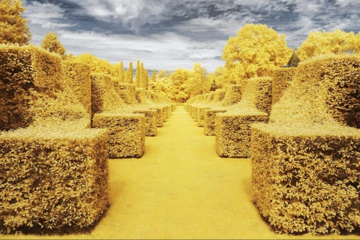 Infrared Photographs by Pierre-Louis Ferrer
