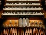 """Song Thrush"" de Collin Van Der Sluijs e Jorn Gruijters Artes & contextos the lowest sounding instrument in the orchestra"