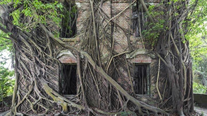 Natureza conquista Arquitetura abandonada - fotos de Jonk Artes & contextos nature resurges to overtake abandoned architecture in a new book of photos by jonk